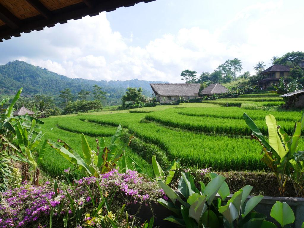un paysage de Bali,avec des rizières, des fleurs et une maison traditionnelle